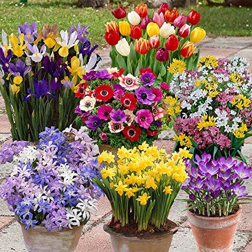 flowering-plants