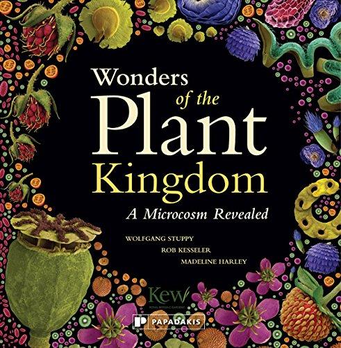 plant-kingdom