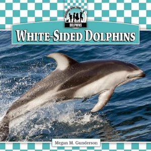 atlantic-white-sided-dolphin