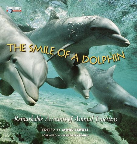 dolphin-body-signals