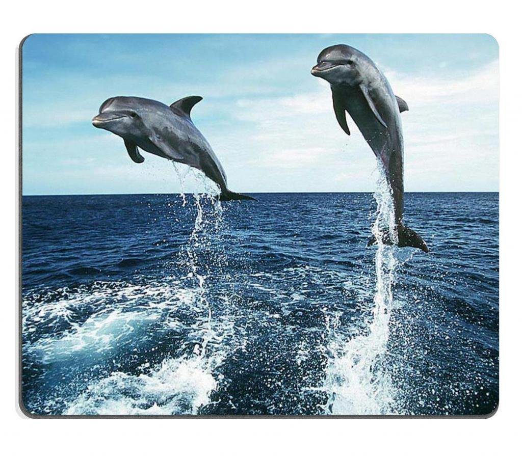 marine-dolphins