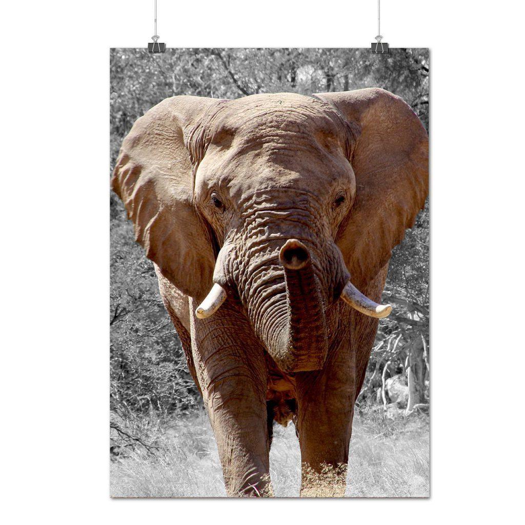 elephant-breeds