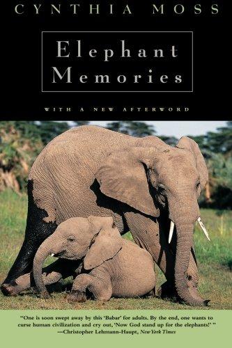 elephants-memory
